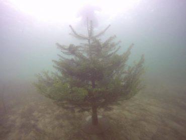Juletræet - Juledyk Diving 2000